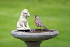 a concrete birdbath and robin