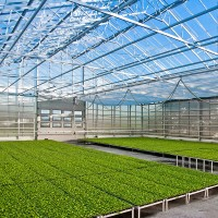 a greenhouse with green plant seedlings