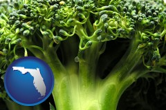 florida fresh broccoli