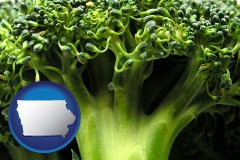 iowa fresh broccoli