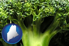 maine fresh broccoli