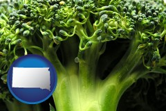 south-dakota fresh broccoli