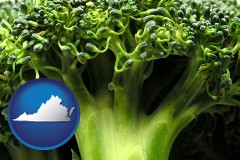virginia fresh broccoli