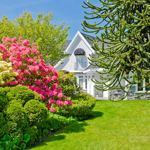 a beautiful lawn and garden