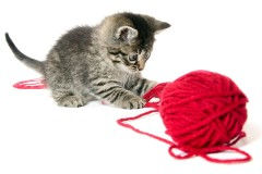 a kitten playing with a ball of red yarn